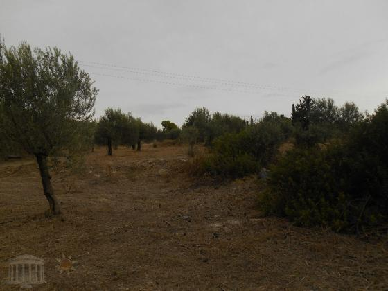 Parcel 4500 m², Katakali, Saronikos