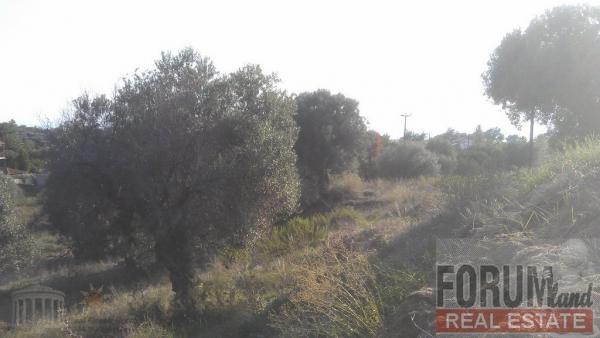 CODE 10747 - Farm parcel for sale Nikiti (Sithonia)