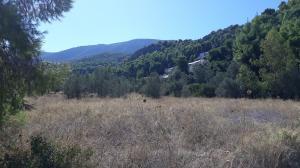 Plot 500 s.m in Kokkosi-Korinthia for 80.000 euros